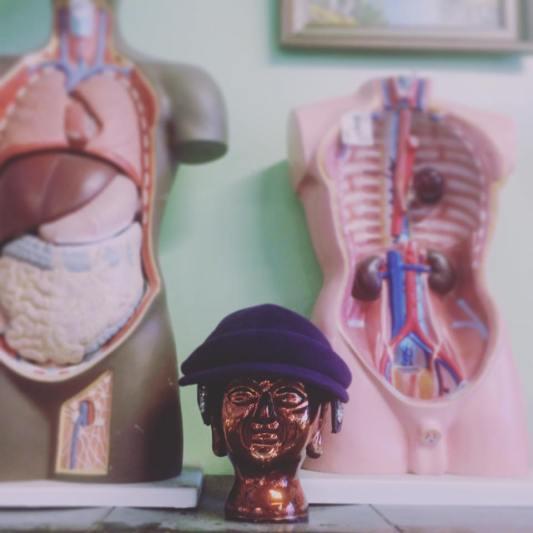 Anatomical Head